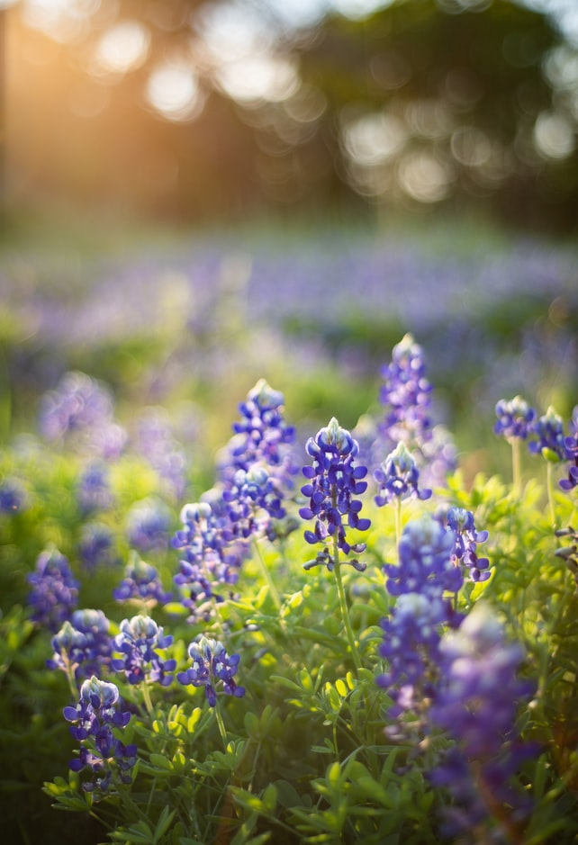 things to do in texas in spring
